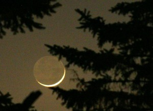 New Moon peeking through trees; image from Bing