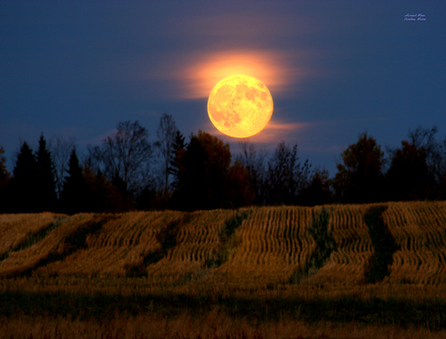 Harvest Moon over the fields